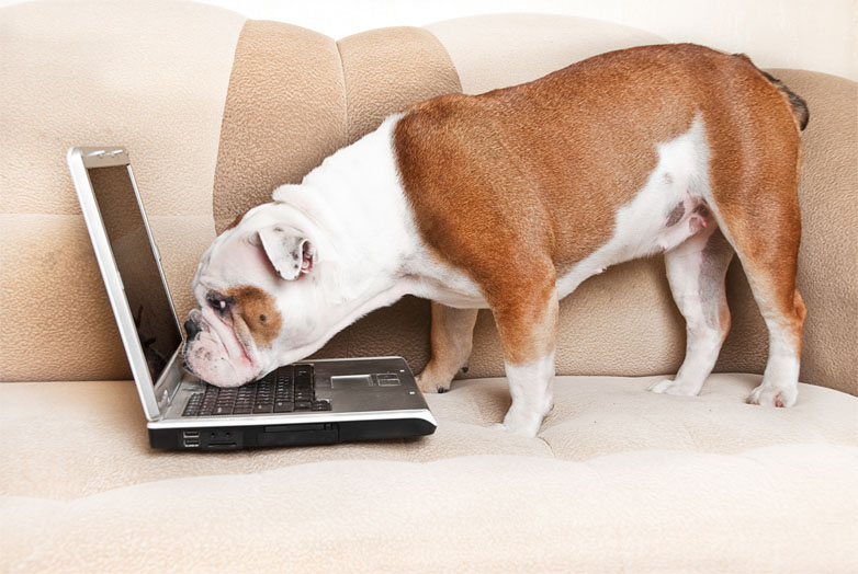 Cool Ways Your Dog Can Use the Internet
